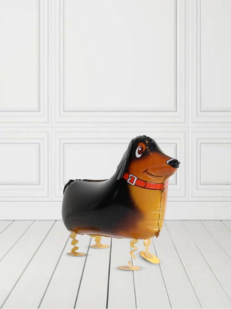 dog3-1